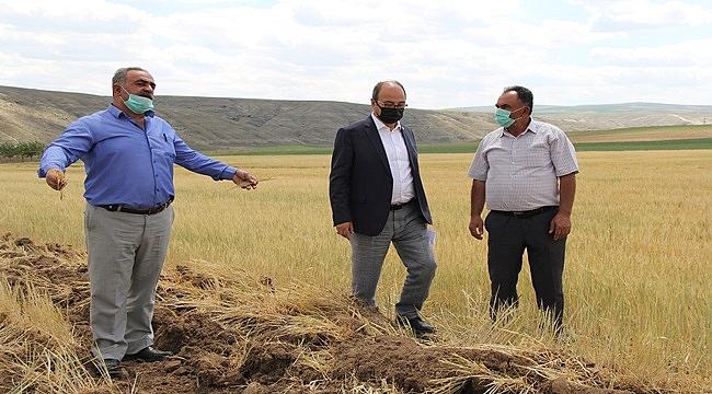 Çankırı'da binlerce dönüm arazi kuraklık nedeniyle pullukla sürülüyor